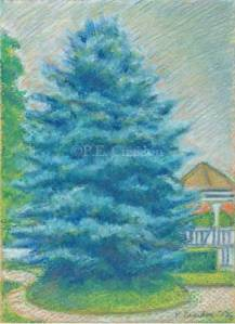P.E. Creedon, 5x7, Bluespruce1, pastel on paper