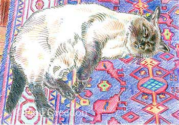Cat on a Rug colored pencil