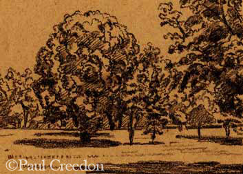 Trees in a field drawing