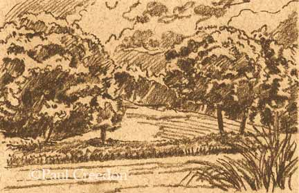 Field and trees drawing